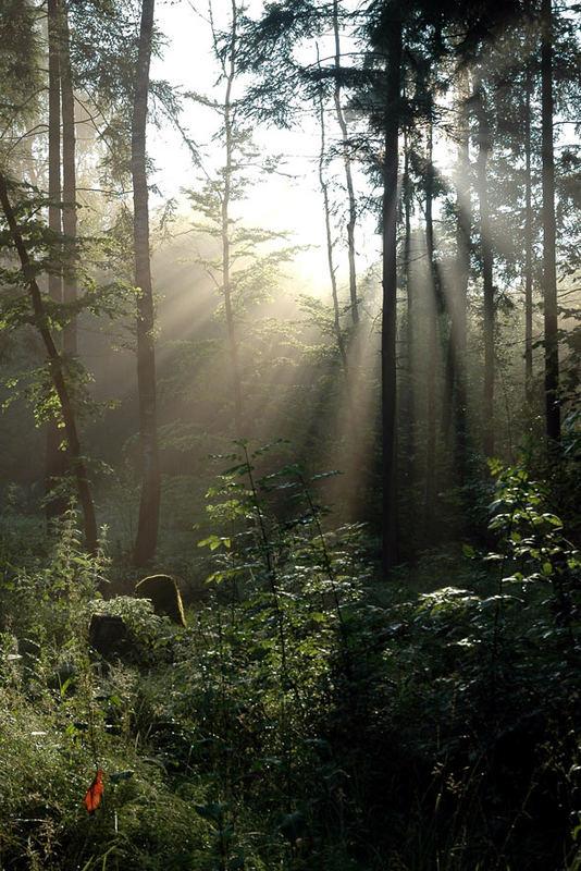 Wer hat dich, du schöner Wald...
