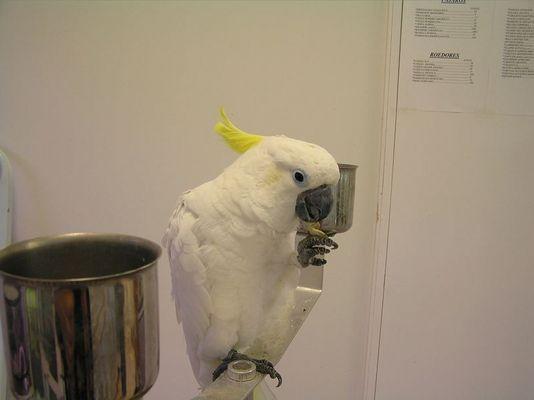 Wer hat einen ............Papagei?