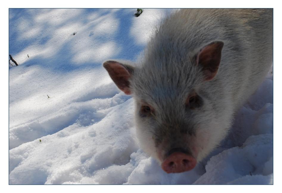 Wer hat hier Schweinenase gesagt?!?