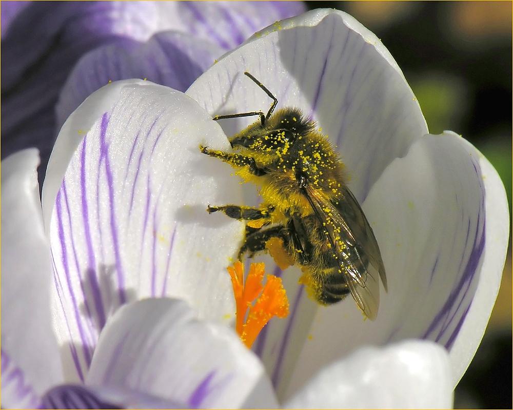 Wer Honig lecken will...