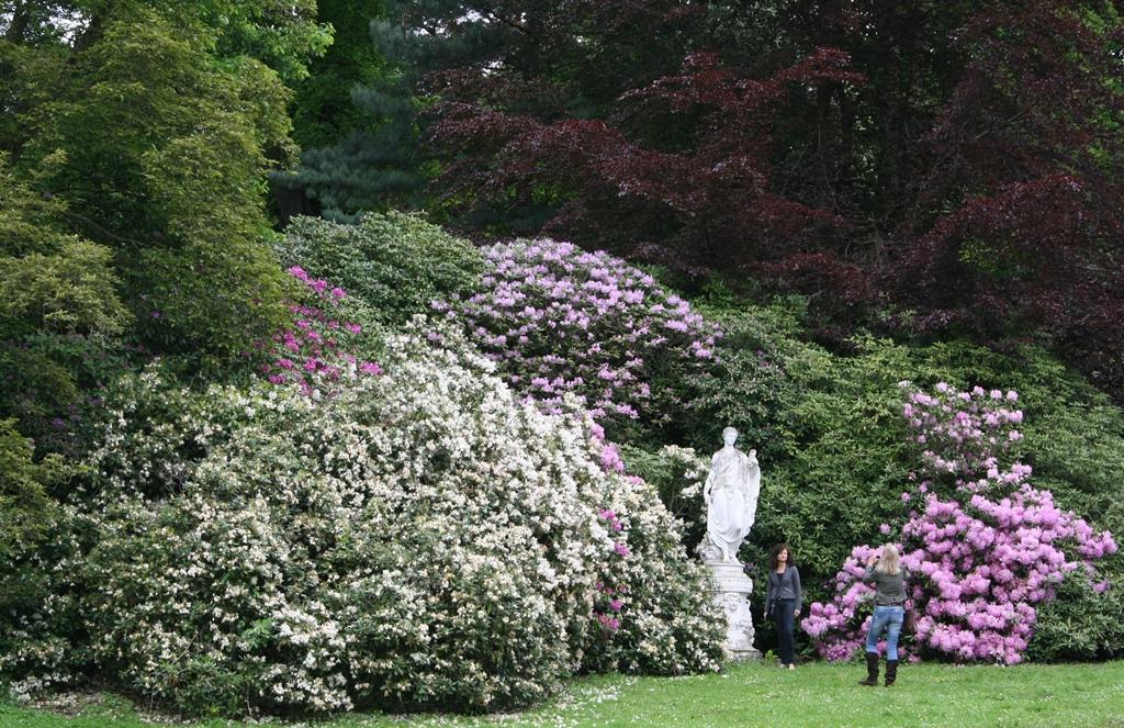 wer ist die Schönste im ganzen Land - riesiger Rhododendron