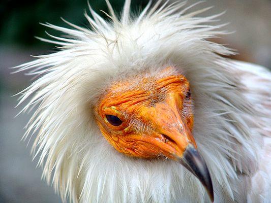 ...wer ist die Schönste im ganzen Zoo?