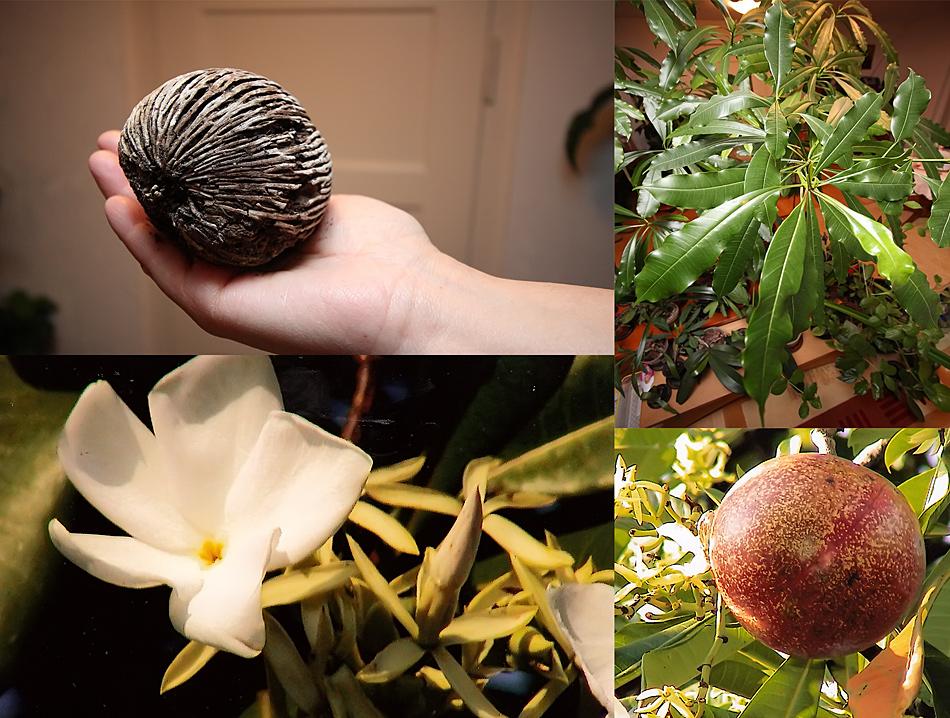 Wer kennt diese Pflanze aus Südostasien ??