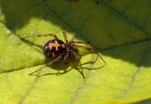 Wer kennt diese Spinne....