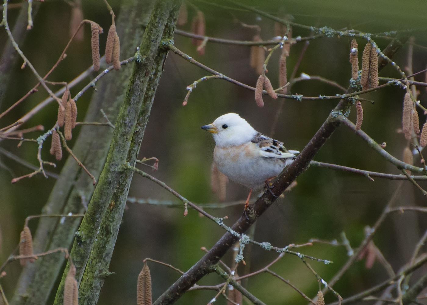 Wer kennt diesen Vogel ??
