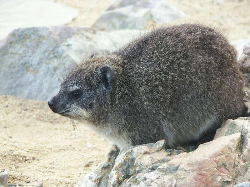 Wer kennt dieses Tier?