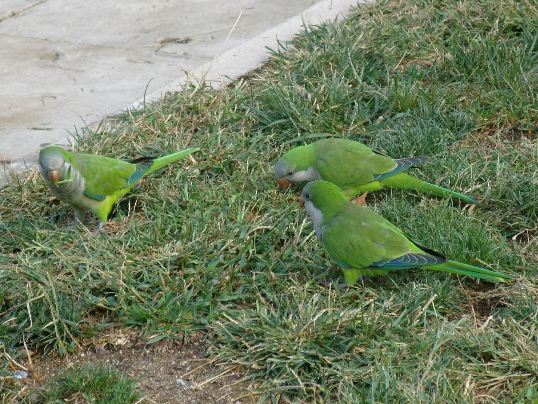 Wer mehr als 3 von diesen Vögeln auf ein Foto kriegt...