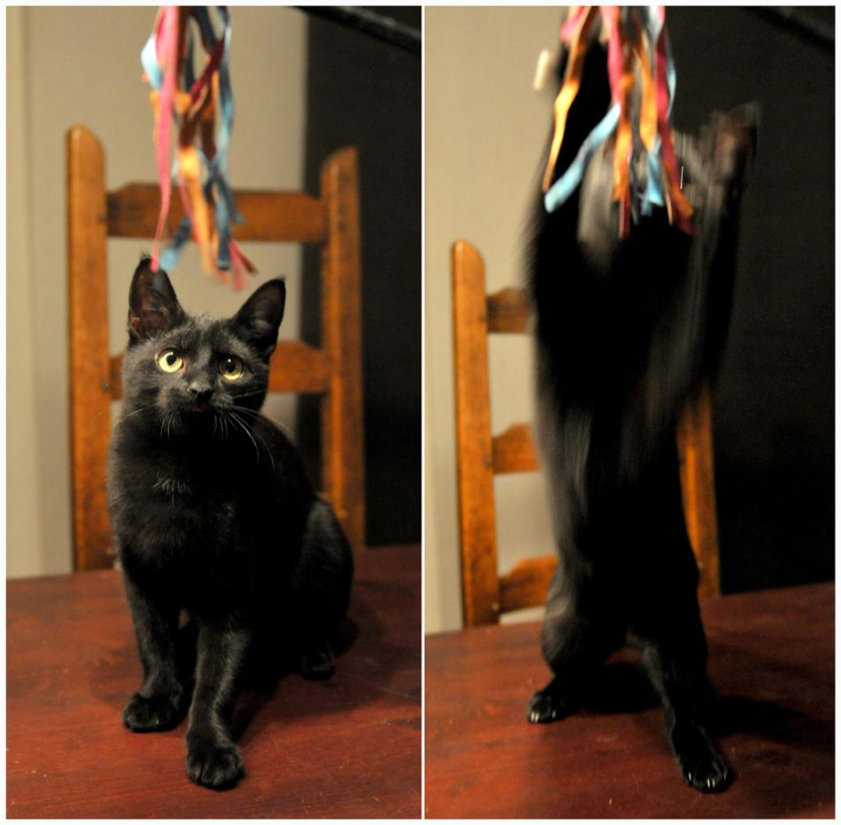 Wer mit Katzen spielt, darf Kratzer nicht scheuen.