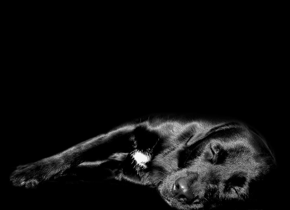 Wer müde ist, merkt die Flöhe nicht.