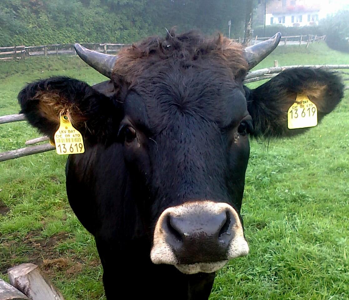 ..wer sagt da blöde Kuh ?