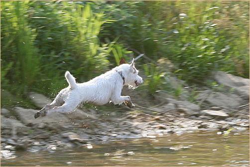Wer sagt das Hunde nicht fliegen können ?