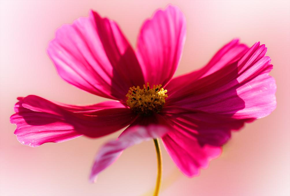 ...Wer Schmetterlinge lachen hört, der weiß...