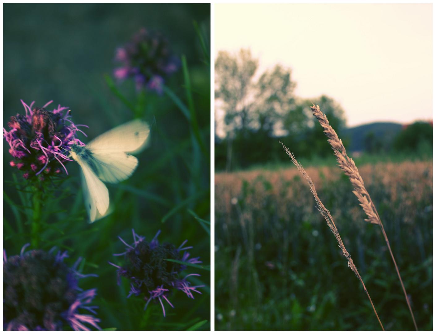 Wer Schmetterlinge lachen hört, weiß auch wie Wolken schmecken.