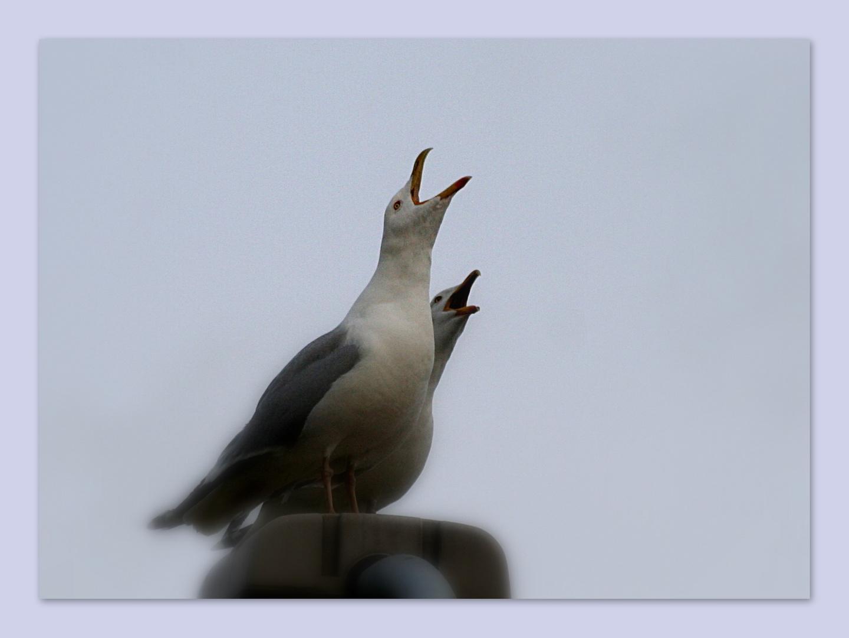 Wer schreit am lautesten ?!