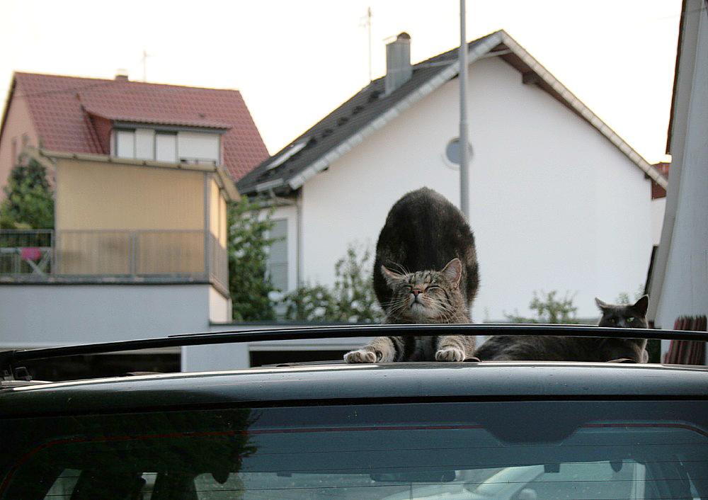 wer sein Auto liebt...