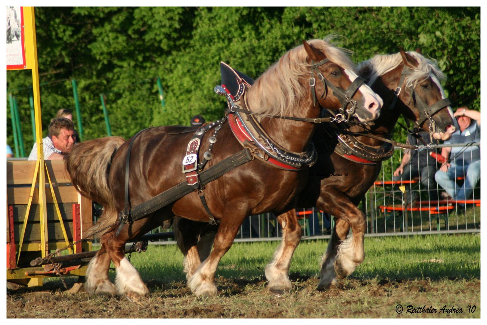 wer sein Pferd liebt, der schiebt ;-)