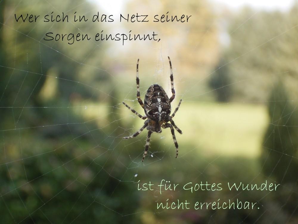 Wer sich in das Netz seiner Sorgen einspinnt, .....