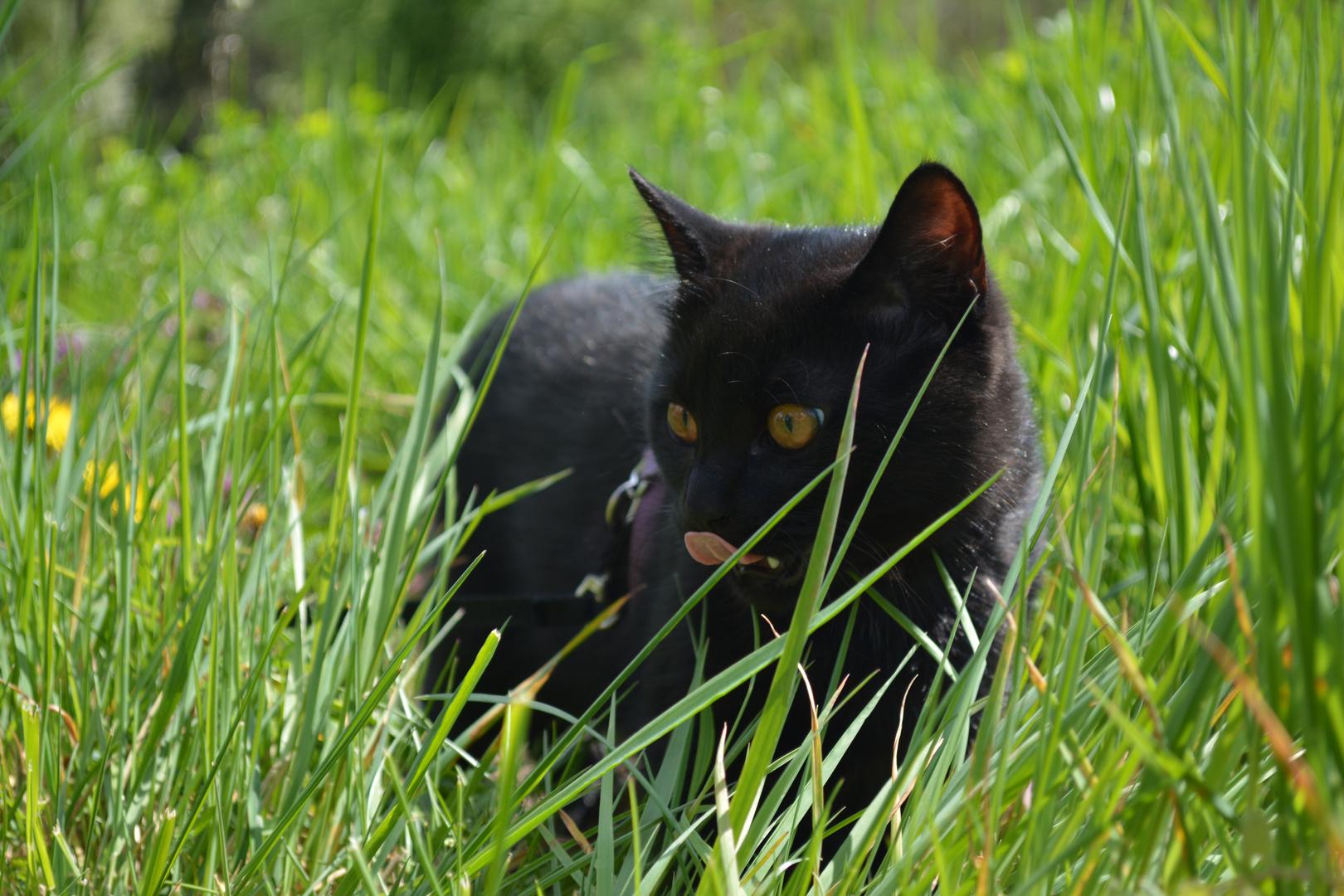 Wer spaziert denn hier im Gras?!