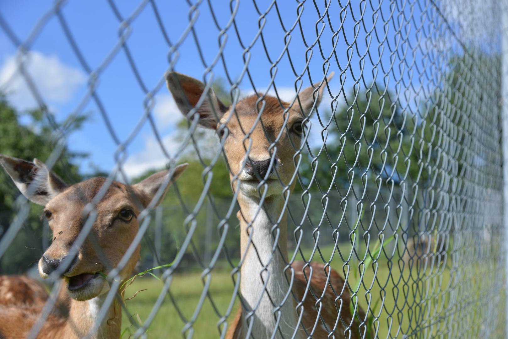 Wer steht denn da nun hinter dem Zaun?