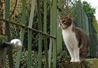 Wer stiert denn da so in Nachbars Garten ??