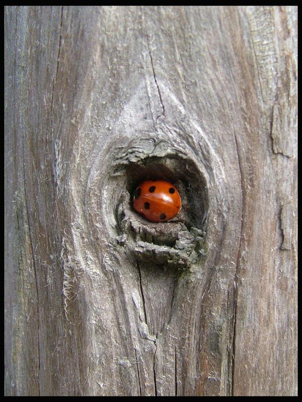 Wer versteckt sich den da?