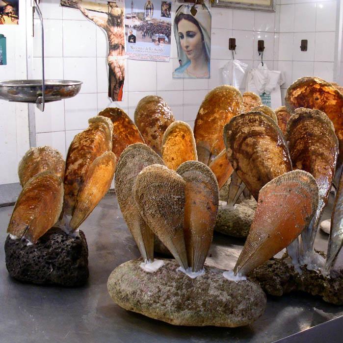 Wer weiß, was für Muschelschalen das sind?