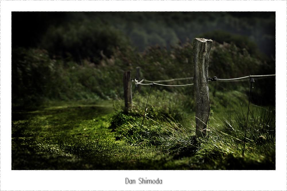 Wer will schon tot über´m Zaun hängen?