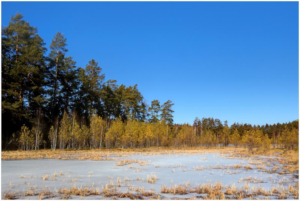 wertvolles Wald-Biotop für Tiere
