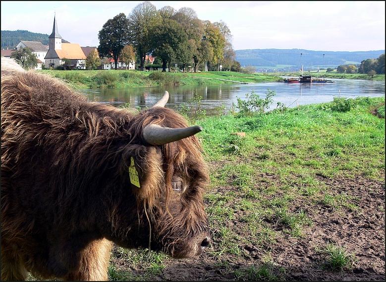 Weser-Wildlife...