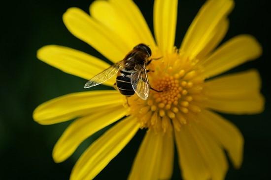 Wespe oder Biene?!