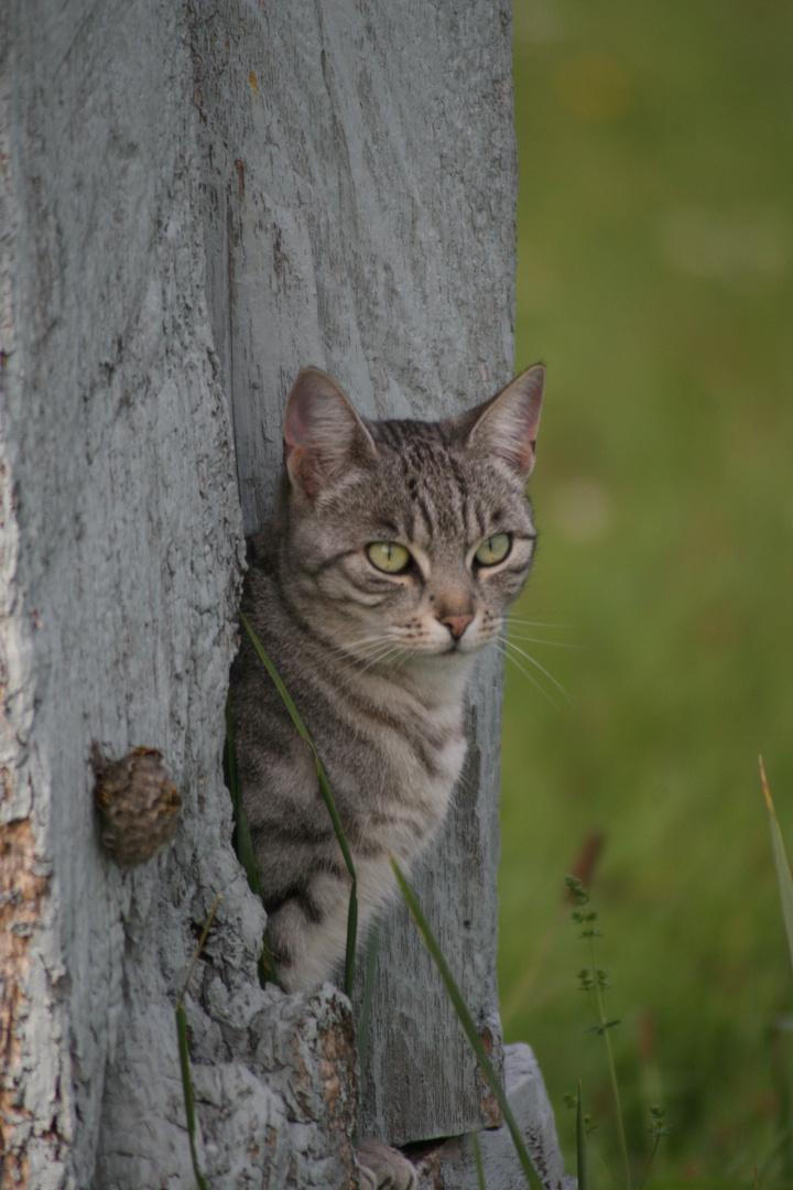 Wespen & freche Katze