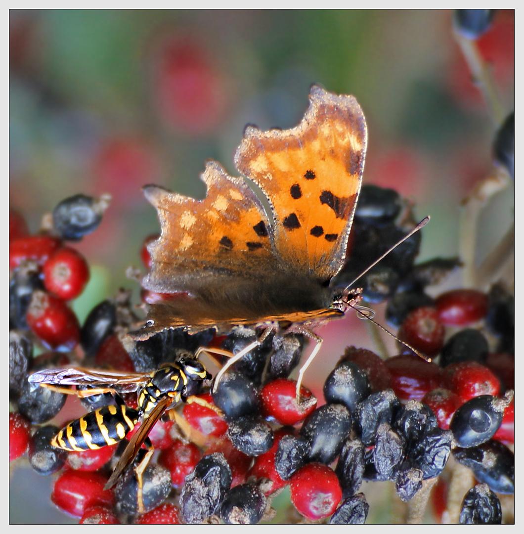 Wespen fressen keine Schmetterlinge