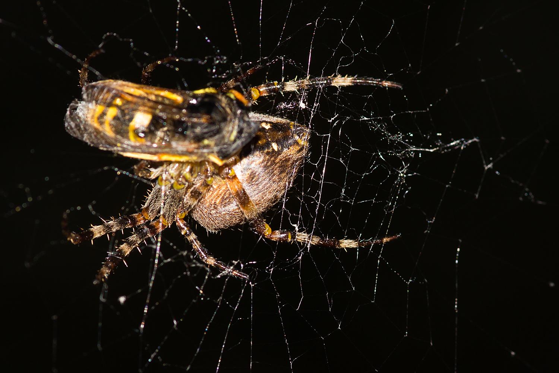Wespen können auch schmecken, oder nicht? 2. Teil