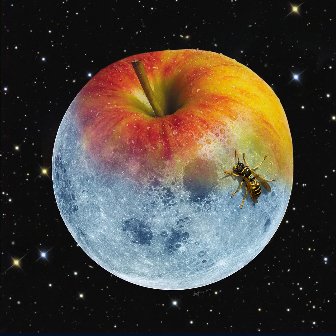 Wespenbesuch auf Apfelmond