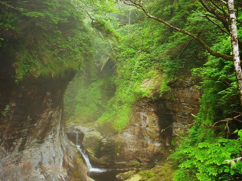 West Coast Trail Impression