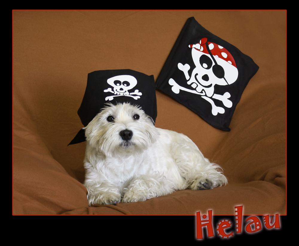West Highland Pirat