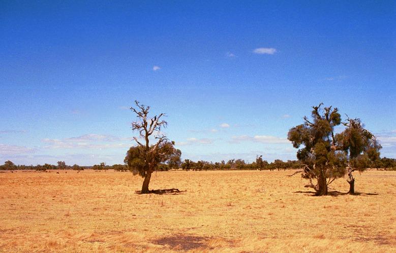 Westausralische Rinderweide