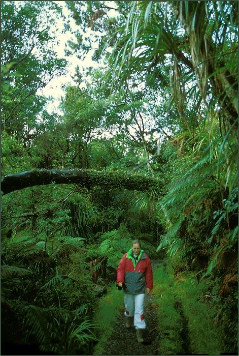 Westcoast - Regenwald