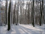 Wester-Winter-Wald