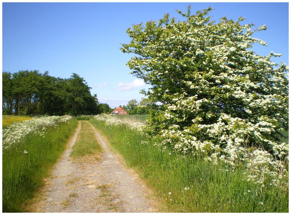 Westermarsch im Mai in Ostfriesland
