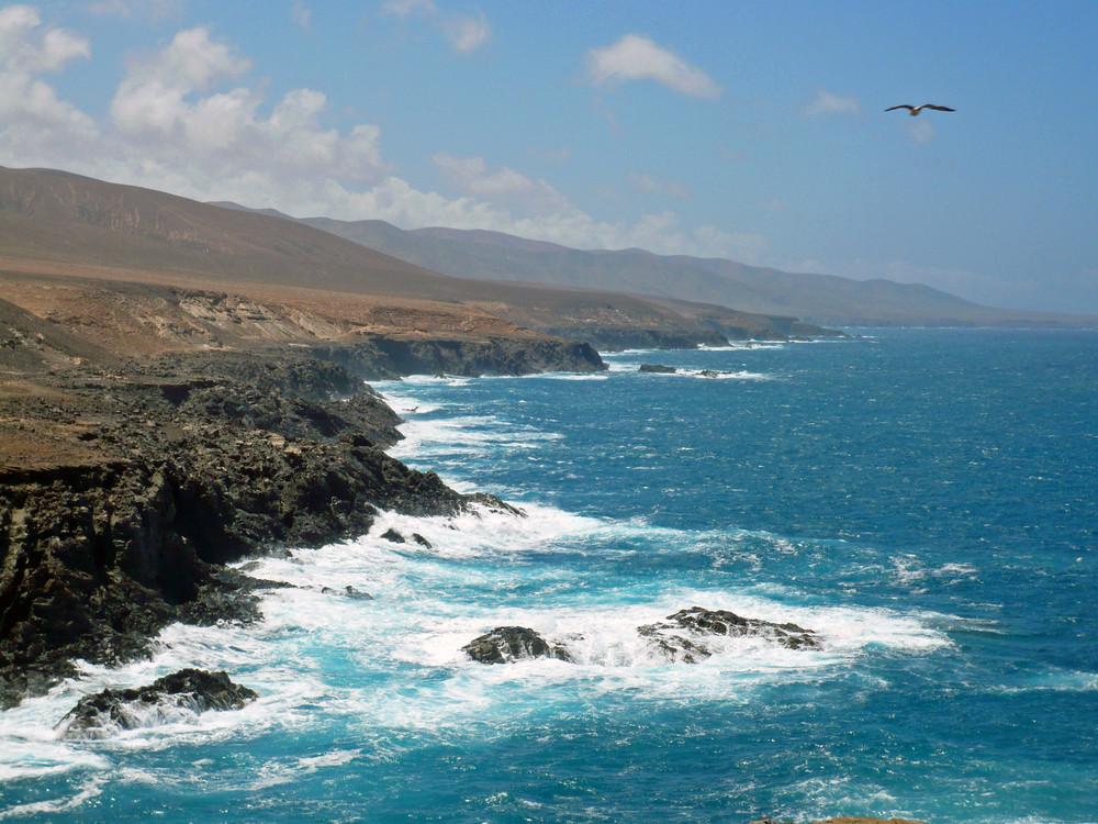 Westküste Fuerteventura mit Vogel