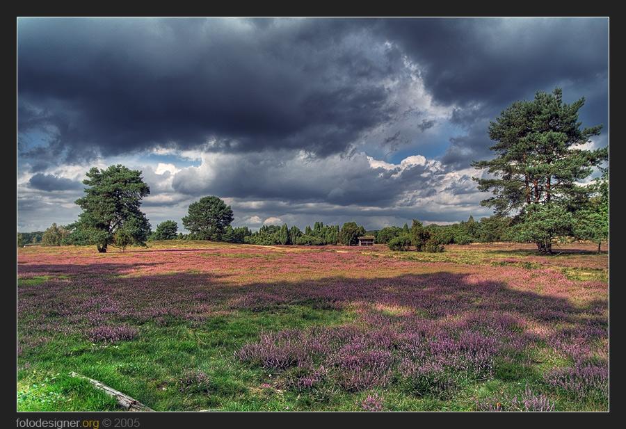« Westruper Heide »