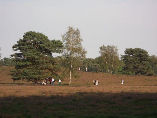 Westruper Heide Herbst