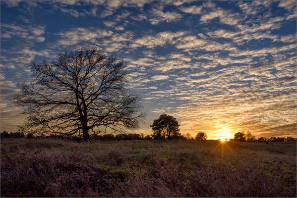Westruper Heide im November