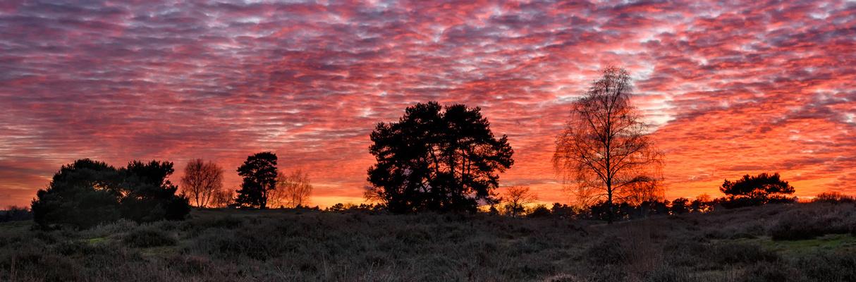 Westruper Heide im November II