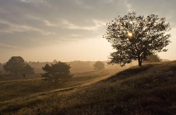 Westruper Heide Novemberstimmung 01