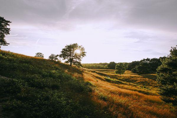 Westrupper Heide