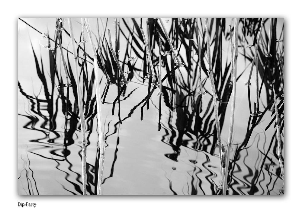 """""""Wet Dreams"""" (Spiegeleffekte im Wasser, Forum Fotografie 2013)"""