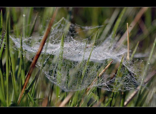 Wet net