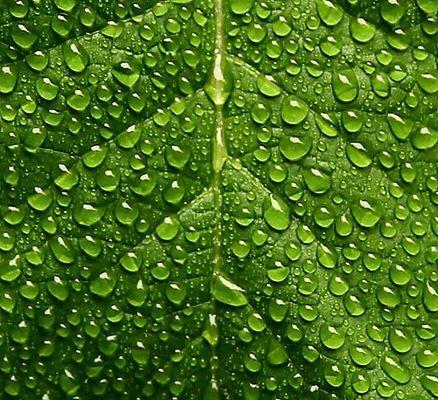 wetgreendropsonleaf (2)